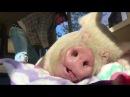 Свинья кайфует когда ее чешут