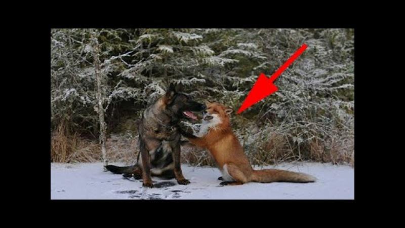 Хозяин проследил за собакой в лесу и обомлел