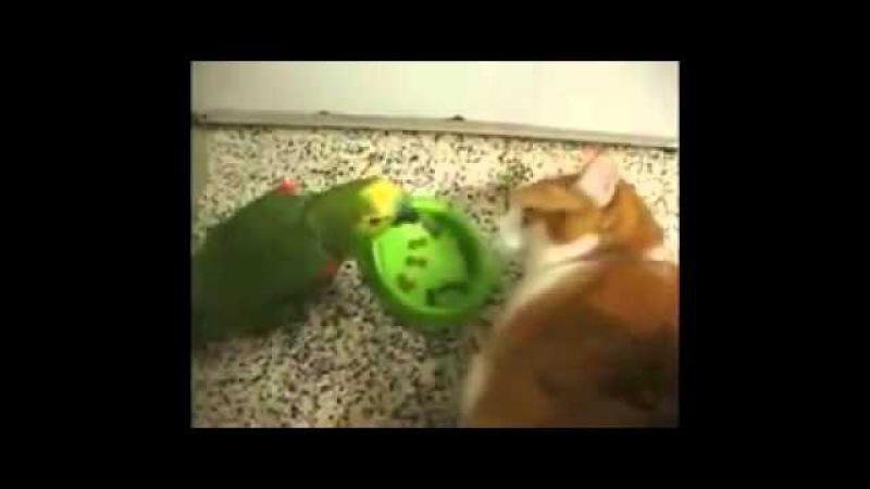 Прикол Попугай достал кота и получил