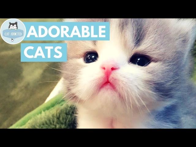 Симпатичные котята, которые заставят вас влюбиться