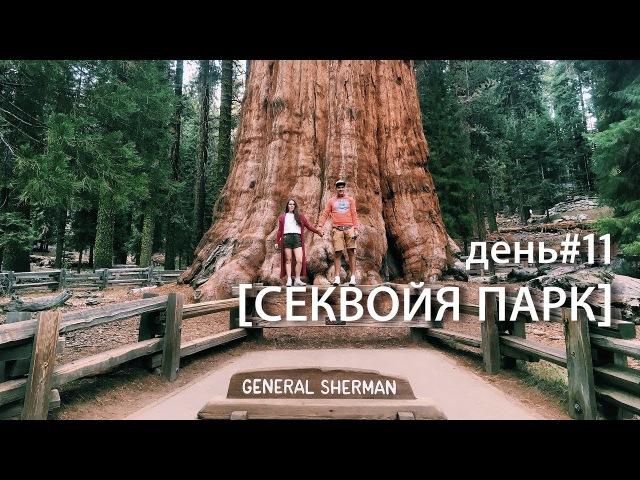 Секвойи. Sequoia National Park, General Sherman Tree. USA ROAD TRIP день10. супермарковы