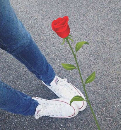 Роза Королева  