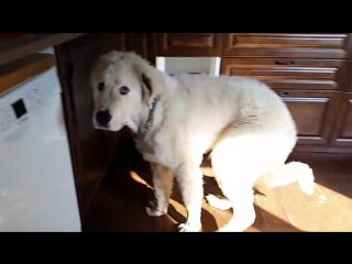 #help_big_dog_Крош