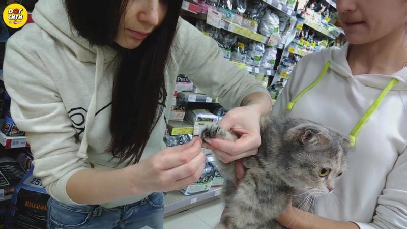 Как приклеить кошке на когти антицарапки