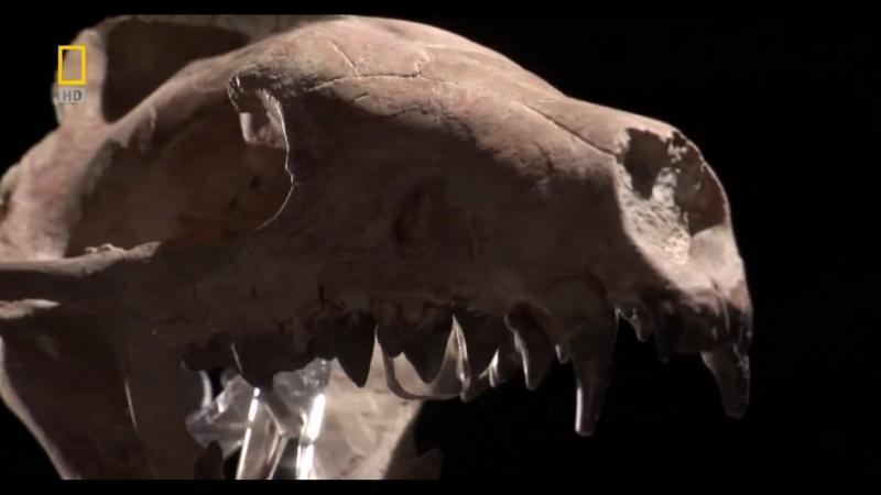 Доисторические хищники/Prehistoric Predators. Челюсти, как бритва/Razor jaws