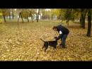 После выставки собак в г.Шахты