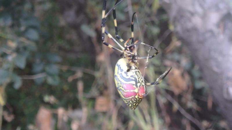 пауки в тайшане 2