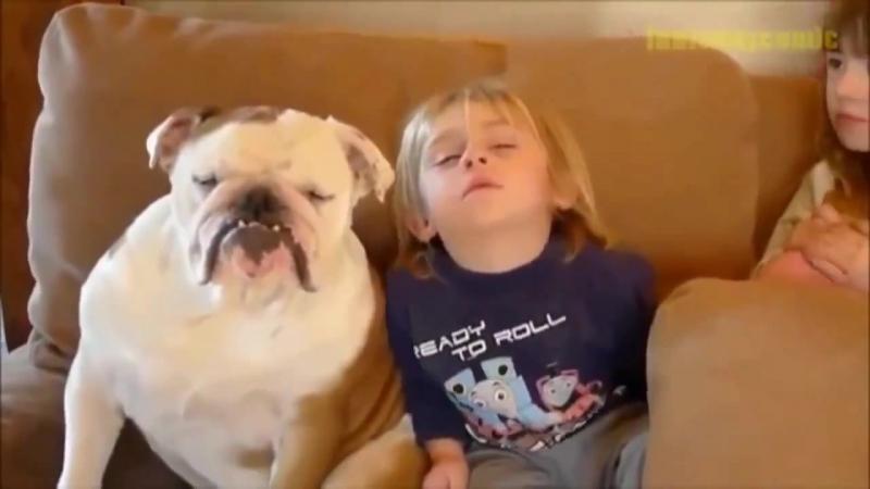 Ребенка и собаку клонит в сон от телевизора