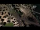 Бойцовский клуб для леопарда Документальный природа животные 2013