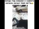 собачья радость
