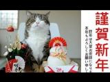 Самый смешной в мире кот.