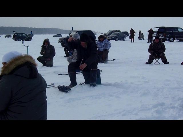 Судак обское море, зимняя рыбалка