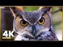 CINEMATIC 4K ULTRA HD TV DEMO V.2, Stock Video Footage