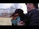 Тренировки для охотничьих собак в межсезонье В курсе дела nhtybhjdrb lkz j[jnybxmb[ cj,fr d vt;ctpjymt d rehct ltkf