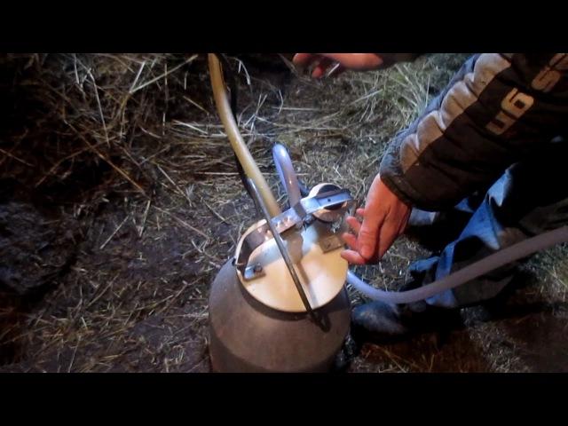 Доение коровы доильным аппаратом. Milking a cow.
