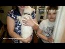 Бездомный щенок первый раз в квартире Усыновление из приюта Дари добро Новосибирск