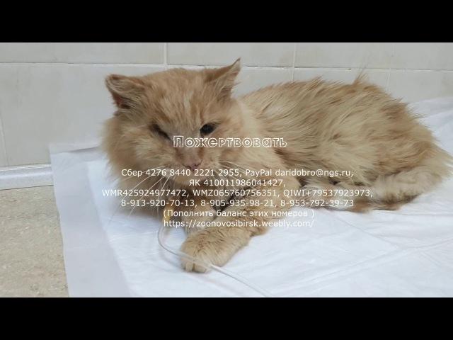 Спасение кота Дождика и еще пяти кошек в приюте Подозрение на Лейкоз и Коронавирус.