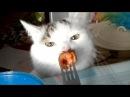 Приколы с кошками и котами 8. Смешные коты и кошки для поднятия настроения!