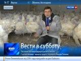 В Башкирии выращивают индюшек размером с барана
