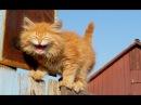 Смешные коты 2018 Приколы с котами Смешное видео с котами Хорошие нарезки до слез