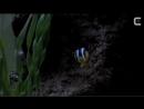 CINEMA BIZARRE - CBTV 15 - RESPONDING AGAIN