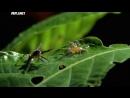 Войны жуков-гигантов / Monster bug wars 12