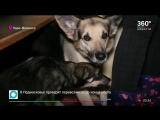 Три десятка собак в Наро‐Фоминске едва не перегрызли друг друга