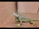 Диназавры в моей ванной! Помогите!)))