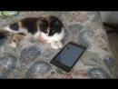 Кошка играет с планшетом