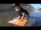 Бездомные собаки ДО и ПОСЛЕ спасения! Трогает