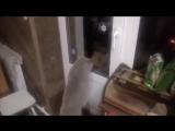 Кот говорит, открой мне
