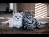 Смешные кошки приколы про кошек и котов 2017 #26 (Коты и Цыплята Утята Петух Белки)