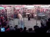 Печальный инцидент в цирке на севере Китая