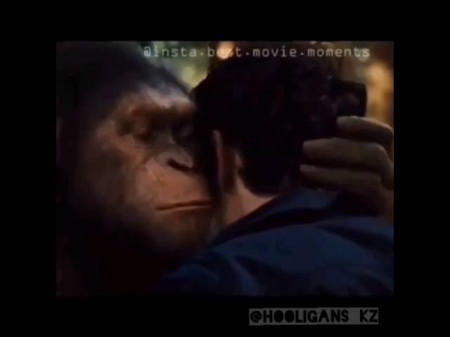 Планета обезьян - Прикол