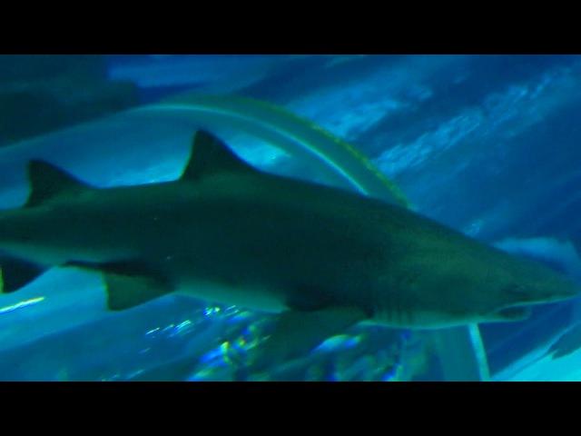 Aqua Rio13 Shark in the House