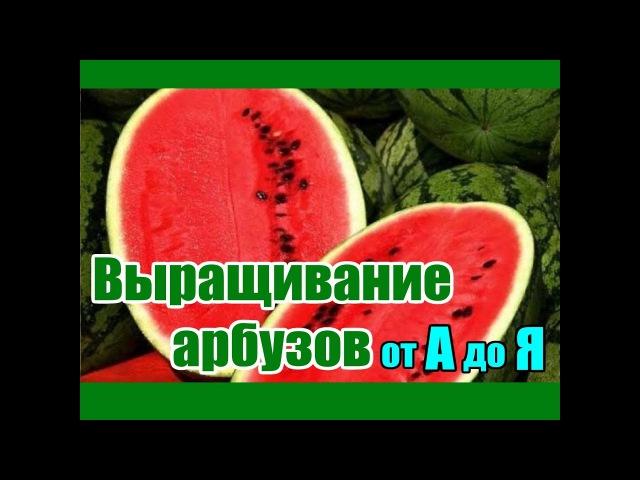 Выращивание арбузов от А до Я Все о бахче в одном видео