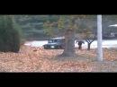 ООН опубликовала видеозапись драматического побега солдата КНДР в Южную Корею