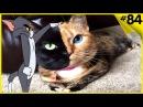 Приколы с Котами - Лучшие приколы с котами и кошками коты видео