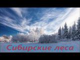 Сибирские леса, одиночный поход, ночь в палатке зимой в 30 градусов, рыбалка на на ...