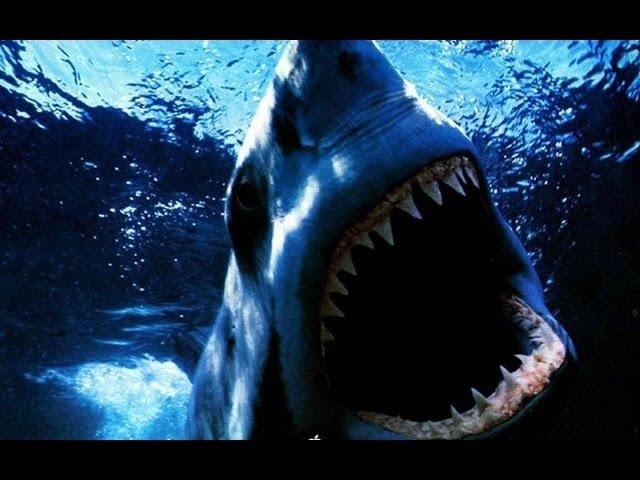 [новый]Фильм ужасов Акула убийца.