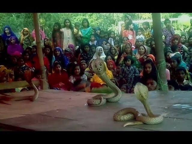 Snake dance fair in the village/Jhapan Khela pat 3