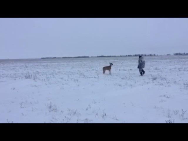 Охотник и косуля нападение Andrey Proskurnya58