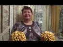Песня ТЁЩА Музыка Валерия Сёмина на стихи Валерия Калинкина