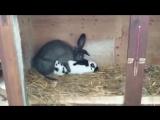 крольки 5 сек