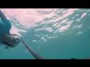 Нина Добрев плавание с акулами для проекта Oceana