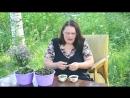 Научные основы ферментации чайных растений mp4