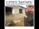 Күшін көрсетемін деп бұзауды өлтіріп тастаған жігіт елдің ашуына тиді видео