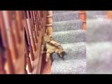 Приколы с кошками и котами #13. Подборка смешных и интересных видео с котиками и кошечками