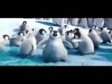 пингвины под электрик кисс