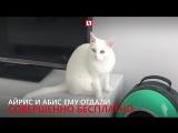 Кошки-красотки